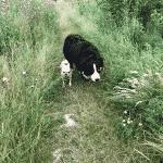 Skævinge Skov Hundehegn
