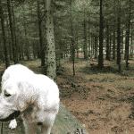 Gjern Plantage Hundeskov