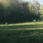 Gadstrup hundelegeplads