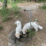 Ålbæk Plantage Hundeskov