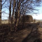 Skullerodsholm (Nørre Lyndelse) Hundeskov