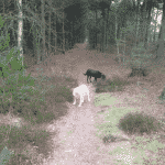 Lilleheden Klitplantage Hundeskov
