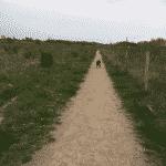 Even hundeskov ved Næstved