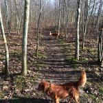 True Skov (hundeskov)