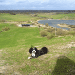 Hedeland Hundeskov