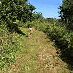 Rønninge Hundeskov ved Ellingevej