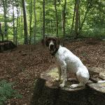 Sorgenfri Slotspark Hundeskov
