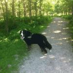 Sperrestrup Skov ved Ølstykke