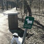 Hundeskoven i Østskoven ved Bakkeskoven