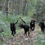 Bognæs Skov - Hundeskov