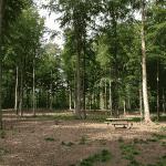 Høbjerg Hegn Hundeskov