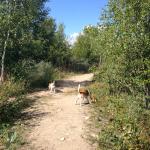 Kongskilde hundeskov og Sorø hundeskov