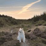 Stensbæk Plantage Hundeskov