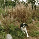Hundeindhegning ved Hareløkkerne på Bornholm