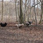 Lellinge hundeskov