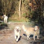 Bevtofte Plantage Hundeskov ved Vojens