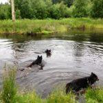 Arden Hundeskov i Rold Skov