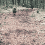 Ølgod Hundeskov i Varde Kommune