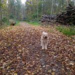 Uggeløse Skov (hundeskov)