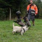 Assens hundeskov - Brunebjerg