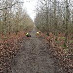 Vestermoseskoven hundeskov